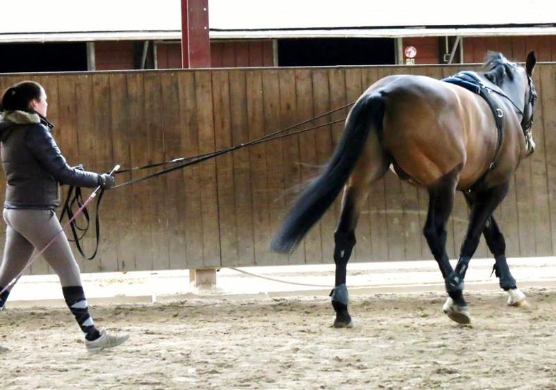Ecole Equestre Scheidstein Illkirch-Graffenstaden Bas-Rhin travail à pied