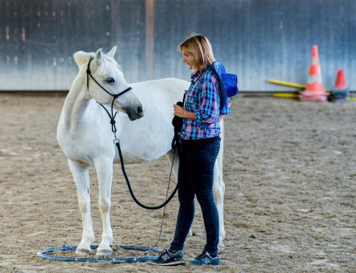 Cours d'équitation éthologique