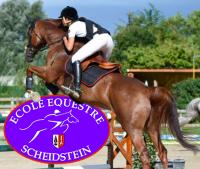 ecole equestre du scheidstein 67400 illkirch-graffenstaden eschau plobsheim strasbourg